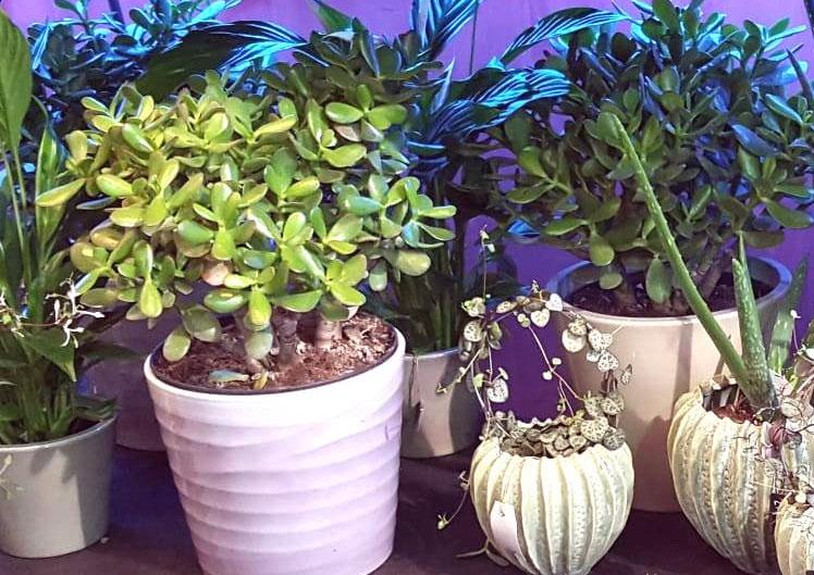 Mit neuen Pflanzen ins Jahr starten 1