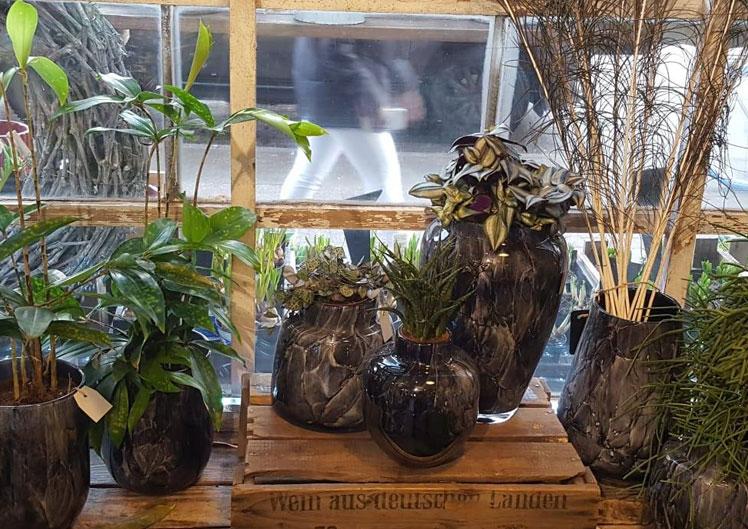 Mit neuen Pflanzen ins Jahr starten 3