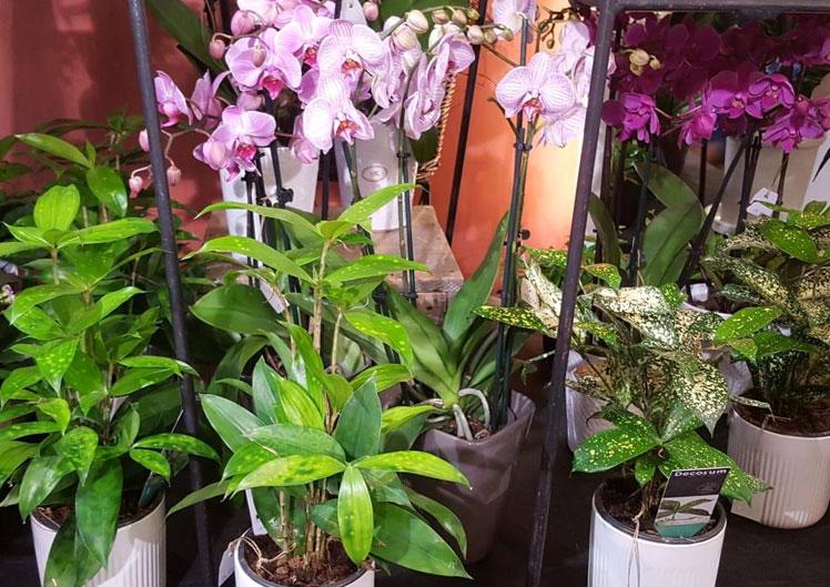Mit neuen Pflanzen ins Jahr starten 4