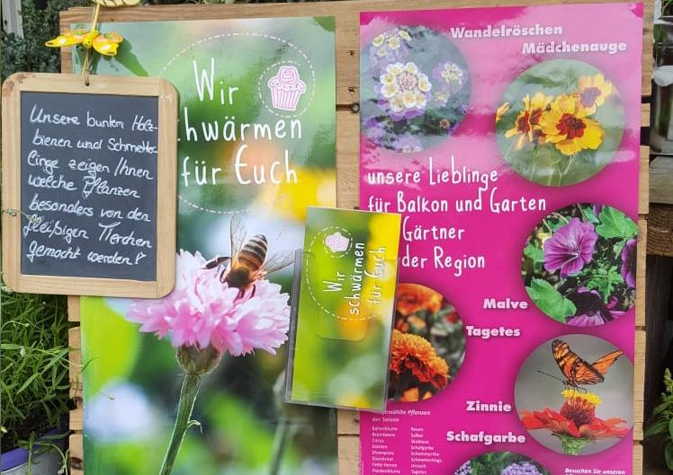 Pflanzen für Bienen und Schmetterlinge 2