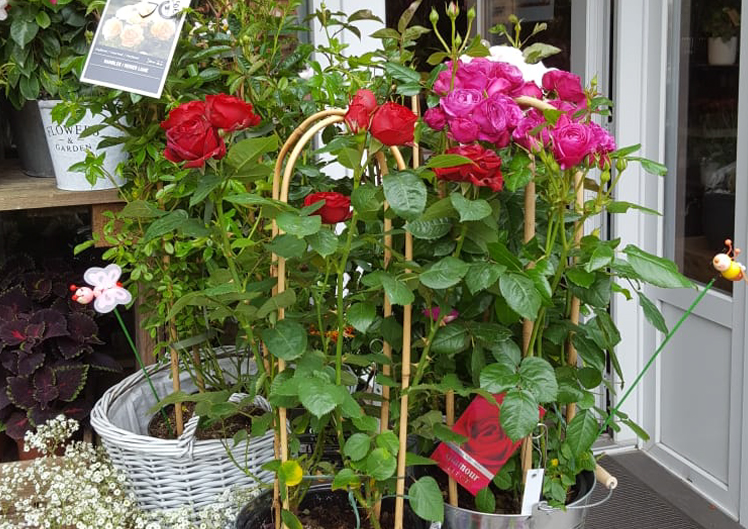Pflanzen für Bienen und Schmetterlinge 5