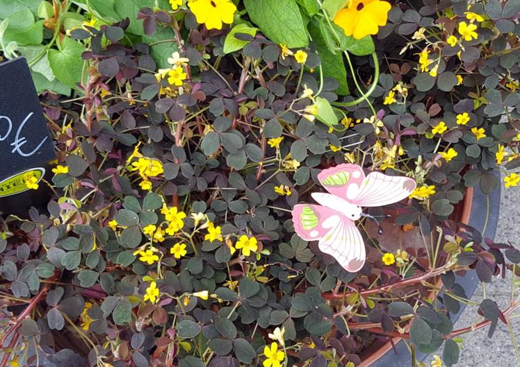 Pflanzen für Bienen und Schmetterlinge 6