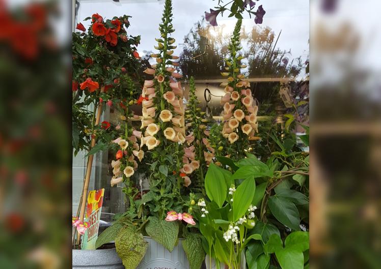 Pflanzen für Bienen und Schmetterlinge 7