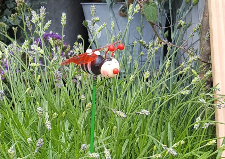 Pflanzen für Bienen und Schmetterlinge 9
