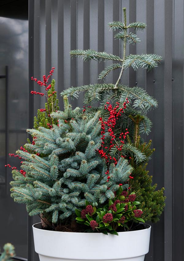 Gartenpflanzen Quelle und Foto: pflanzenfreude.de 1