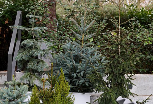 Gartenpflanzen Quelle und Foto: pflanzenfreude.de 3