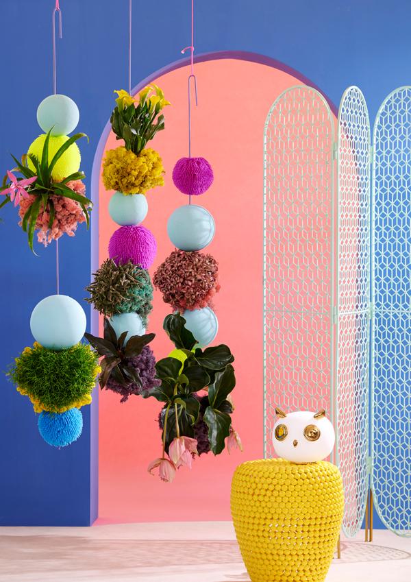 Zimmerpflanze Quelle und Foto: pflanzenfreude.de 1
