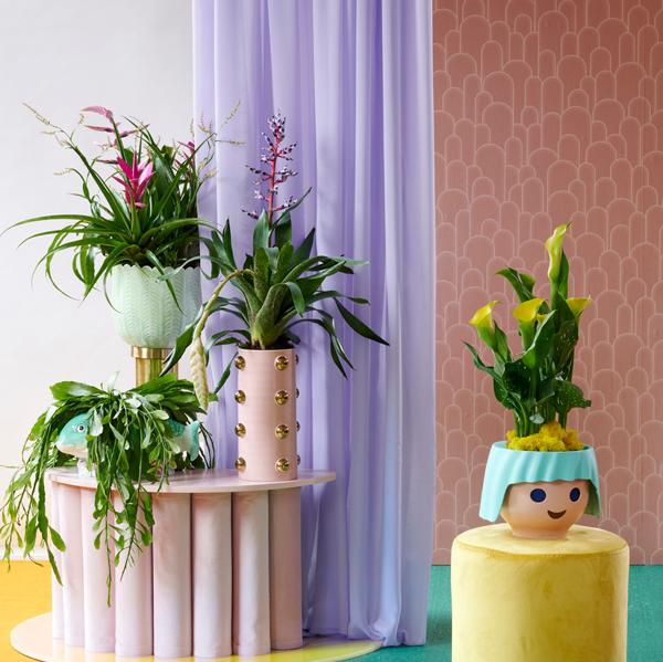 Zimmerpflanze Quelle und Foto: pflanzenfreude.de 2